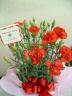 【母の日ギフト】 カーネーション花鉢♪