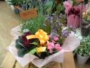 【母の日ギフト】 お任せ花鉢セット♪