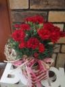 母の日♪カーネーション鉢♪赤色5寸かご付