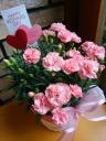 母の日♪カーネーション鉢♪ピンク5寸かご付