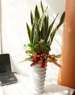 「サンスベリア」メインの観葉寄せ植え♪