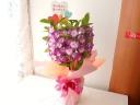 蘭鉢♪デンドロビウム・母の日ver.*'ー')ノ