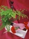 観葉植物+赤いカーネーション付き