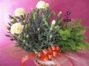 カーネーション(黄色)・アジアンタムの鉢物