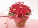 お母さんに贈りたい、赤いお花のアレンジメント