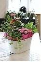 【母の日】鉢花アレンジメントアンスリューム入り