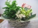 母の日ピック付き!癒しのグリーンの寄せ鉢セット