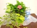 観葉植物5種セット