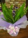 *紫香蘭*