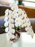 京都の風呂敷で包んだ和風の3本立ち胡蝶蘭