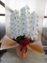 胡蝶蘭3本立  12輪×2