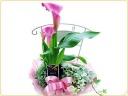 カラーのお花とアイビー♪