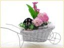 可愛い犬とお花たち♪