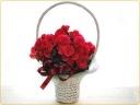 ボリュームたっぷりのベゴニア花鉢♪