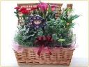 お花の鉢物とトピアリー♪
