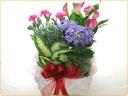 カーネーション、カラー、紫陽花など寄せ鉢で♪