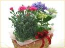 カーネーション・紫陽花をセットでお届け♪