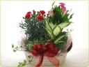 花鉢と観葉植物をミックスで♪