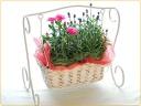 ユ~ラユラ、ブランコにお花達と♪
