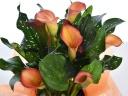 オレンジ色のお花のカラー、(A)