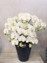 造花 胡蝶蘭の鉢物