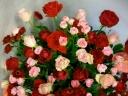 愉快な花たち