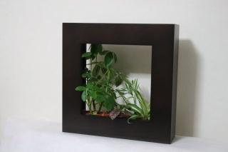 Midori no Sekai  観葉植物