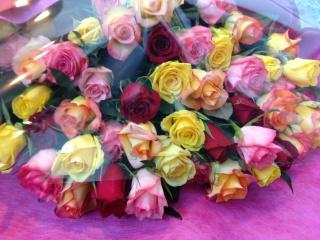 ミックスカラー・バラ50本の花束
