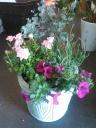 春の寄せ植え花鉢 テラコッタ