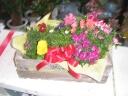 秋植え花苗バラエティーギフトセット(15入り)