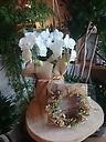 ミニ胡蝶蘭とドライリースのセット