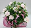 優しいピンクのカーネ―ション5寸(鉢カバー付)