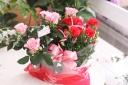 バラとカーネーションのセット ピンク