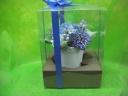 puri blue3