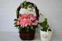 お花とかわいいサボテンセット-①