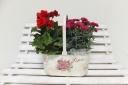 カーネーション&ベゴニア 花鉢セット