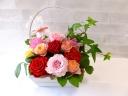 薔薇☆アイビー苗+黒つぼ酢のHappyセット