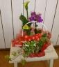 カラーとミニ胡蝶の寄せ植え