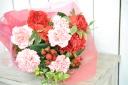 母の日スタンダードカーネーションの花 B0137