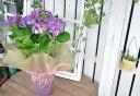 母の日に ピンクの紫陽花(花鉢) ☆