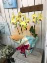 黄色胡蝶蘭