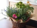 【季節の花鉢と観葉セット】