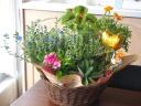 【花鉢と幸運フクロウのセット】